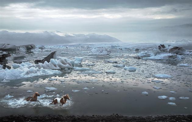 32 Beautiful Horse Photography (31)