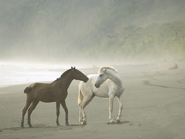 32 Beautiful Horse Photography (4)
