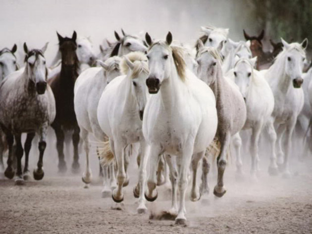 32 Beautiful Horse Photography (6)