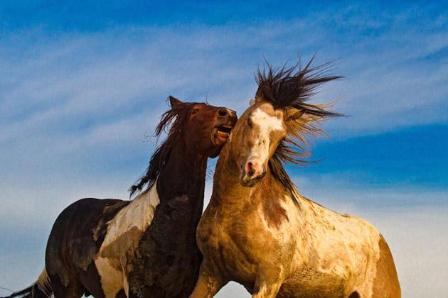 32 Beautiful Horse Photography (8)