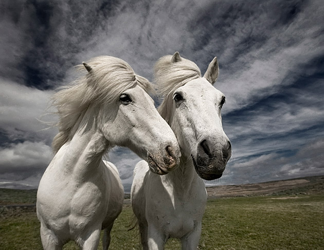 32 Beautiful Horse Photography (9)