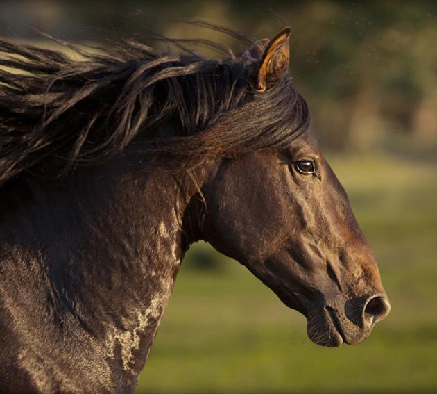 32 Beautiful Horse Photography