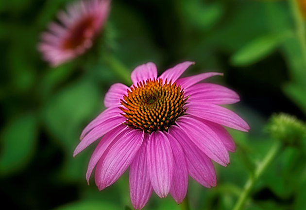 Pink Flower by William Roberts
