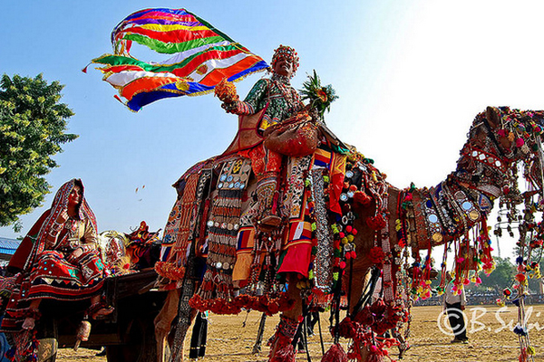 Pushkar Camel Festival, India