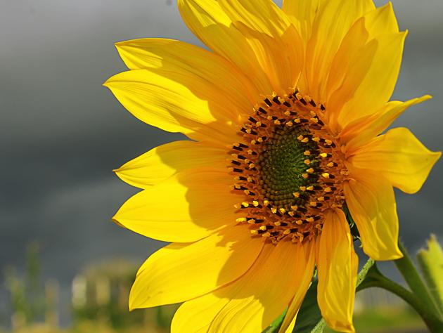The beauty in the simplicity of a stamped flower - A Beleza estampada na simplicidade de uma flor by Novais Almeida
