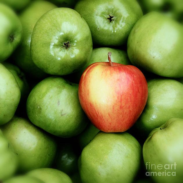 Beautiful Apple Photography (1)
