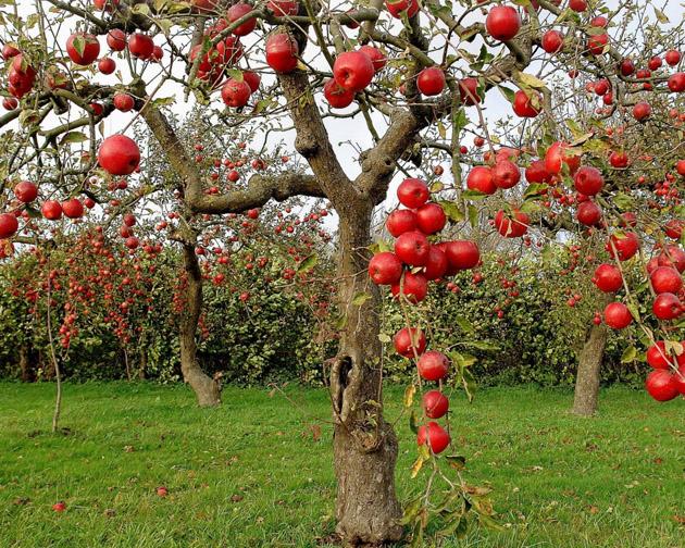 Beautiful Apple Photography (10)