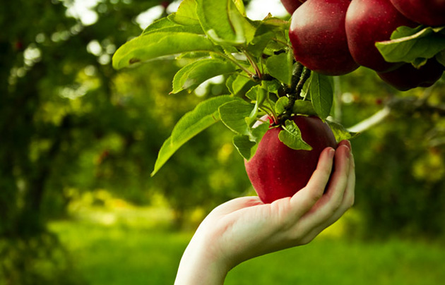 Beautiful Apple Photography (2)