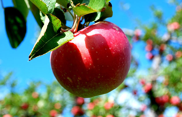 Beautiful Apple Photography (6)