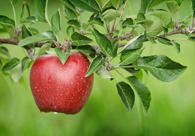 Beautiful Apple Photography (8)