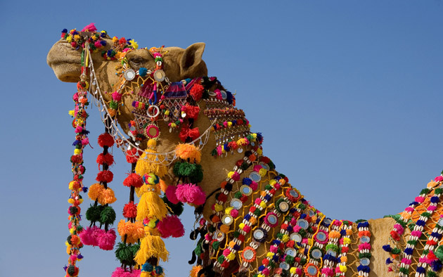 ??????? ??? ???-??? ??? (Decorated Camel in Jaisalmer)