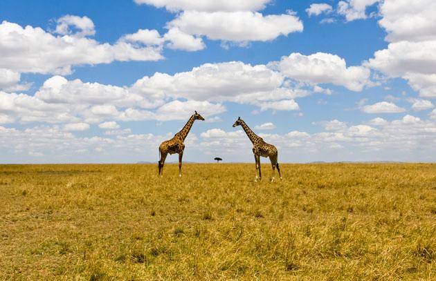 amazing & Beautiful Photos of National Geographic Photo Contest 2010 (12)