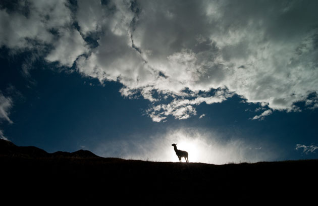 amazing & Beautiful Photos of National Geographic Photo Contest 2010 (43)
