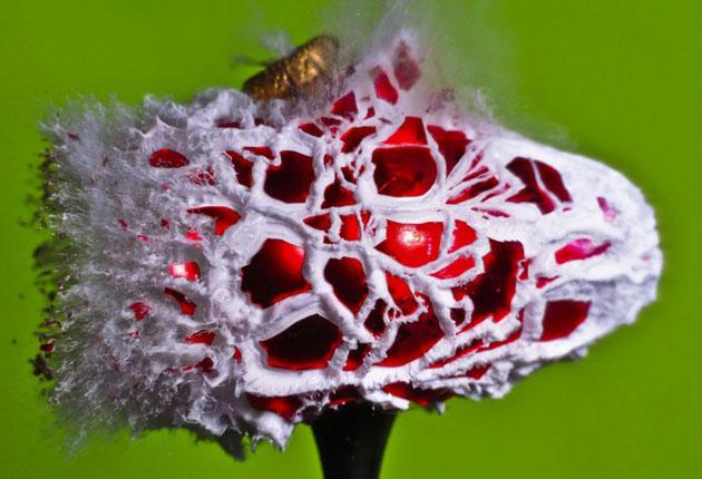 mesmerizing high speed photography (13)