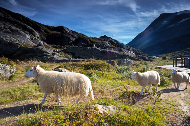 28 Man made beauty in the world of Trollstigen (12)