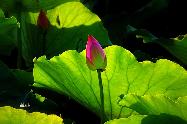 Blooming color by Khoi Tran Duc