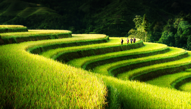 Rice Field Terrace - Northern Vietnam by Bsam