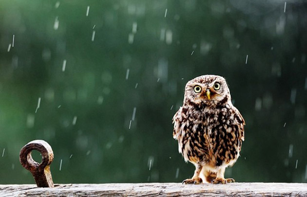 25 Fabulous Rain Wallpaper for your Desktop (17)