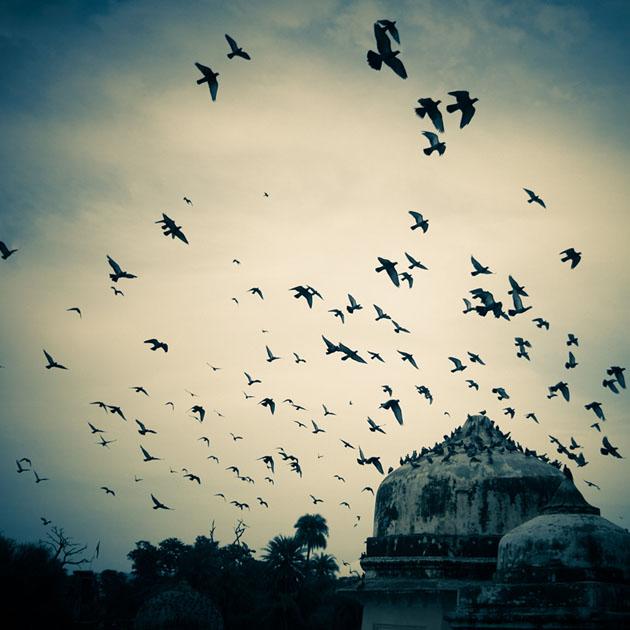 Fly away by Nitish Kumar Meena