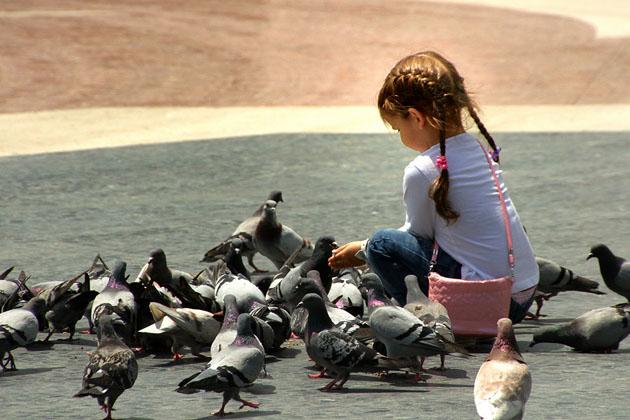 Girl feeding pigeons by Carlos Gotay