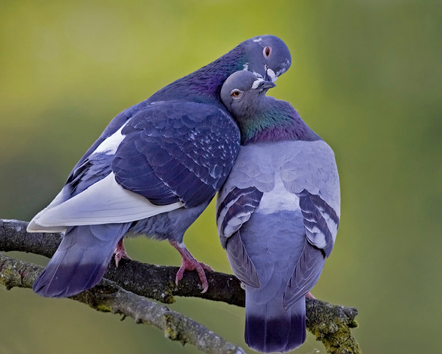 Love Birds by Henrik Nilsson