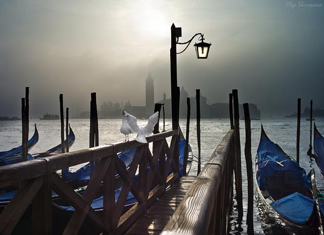 Love pigeons Venice by Olga Shiropaeva