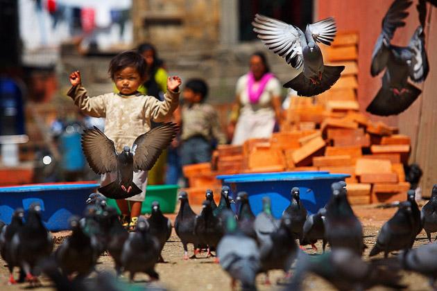 Master of Pigeons by Viacheslav Smilyk