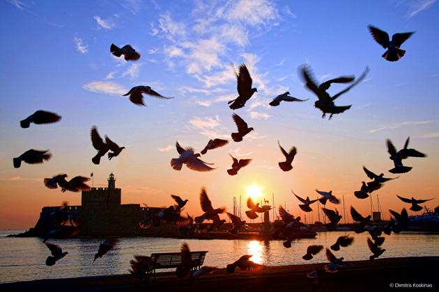 Mornings fluttering of pigeons  by Dimitris Koskinas