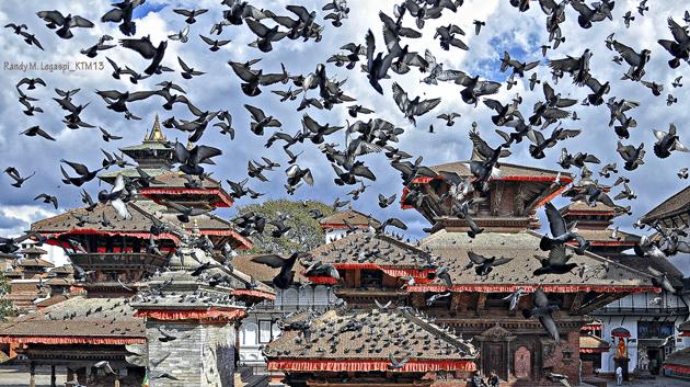 Pigeons pigeons! by Randy Legaspi