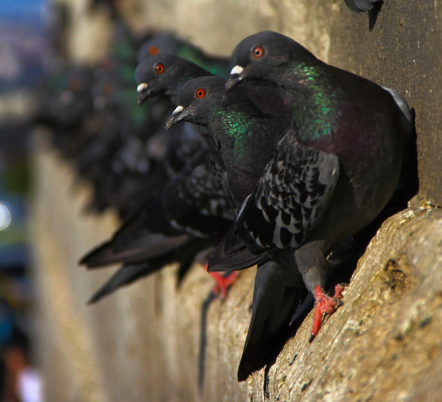 Pigeons... by Sinem Savkin