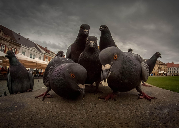 you have come to the wrong neighborhood by Visez Culori