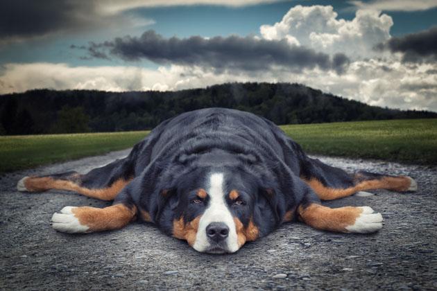 20 animal manipulated photographs by john wilhelm