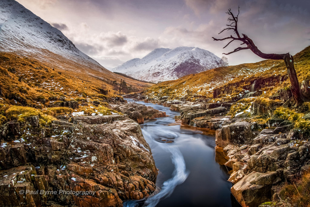 Glencoe Tree by Paul Byrne