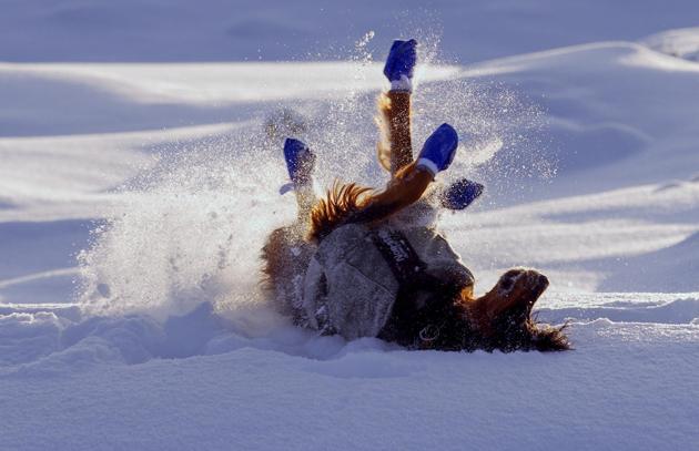 I LOVE SNOW by Jørn Allan Pedersen