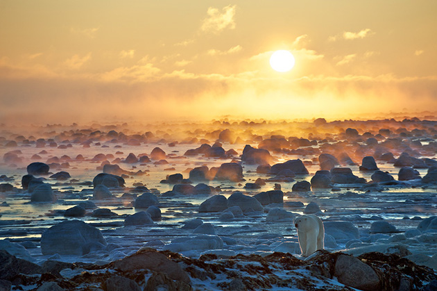 Polar Bear and Sunrise by Sean Crane - Seal River, Manitoba, Canada