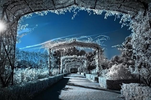 Winter Gardens by Alfon No