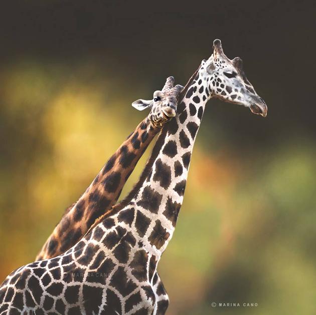 Amazing Wildlife Photography by Marina Cano (11)