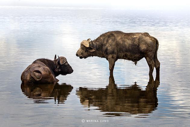 Amazing Wildlife Photography by Marina Cano (12)