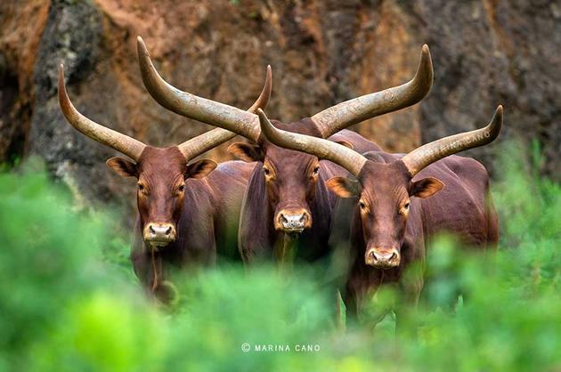 Amazing Wildlife Photography by Marina Cano (13)
