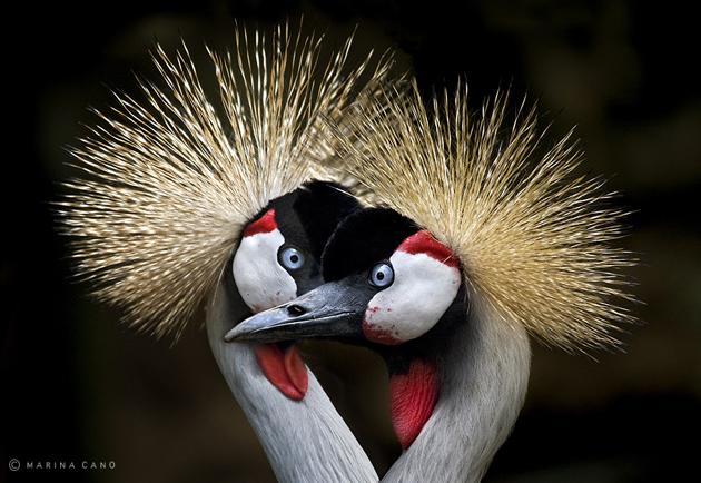 Amazing Wildlife Photography by Marina Cano (15)