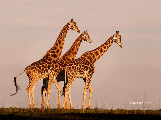 Amazing Wildlife Photography by Marina Cano (17)