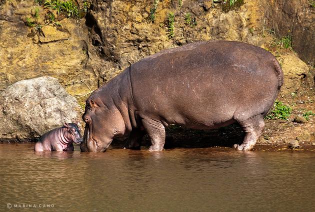Amazing Wildlife Photography by Marina Cano (2)