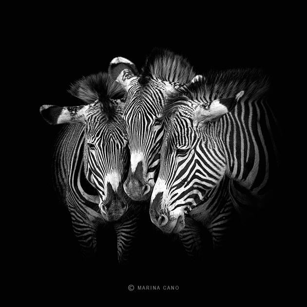 Amazing Wildlife Photography by Marina Cano (3)