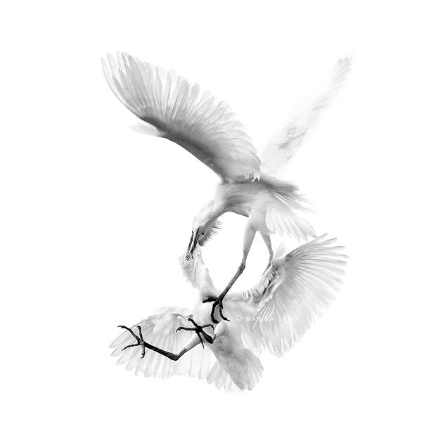 Amazing Wildlife Photography by Marina Cano (4)