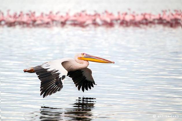 Amazing Wildlife Photography by Marina Cano (7)