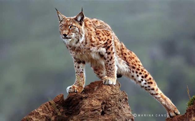 Amazing Wildlife Photography by Marina Cano (9)