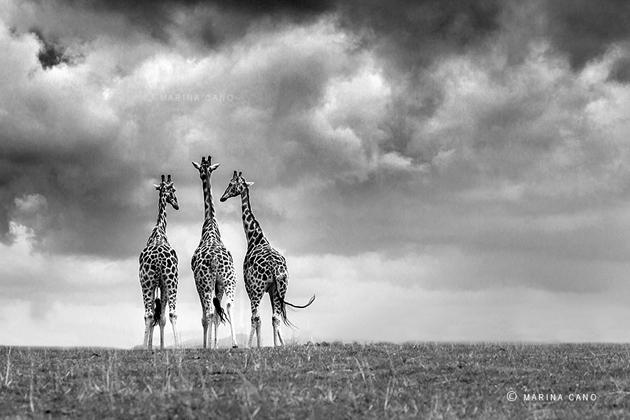 Amazing Wildlife Photography by Marina Cano