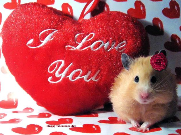 Valentine's Day Special (3)