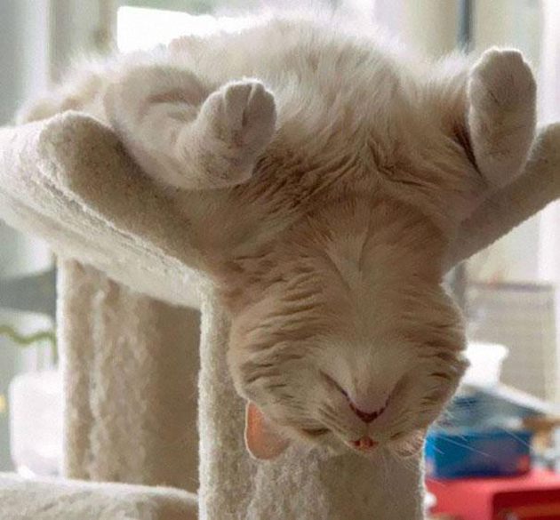21 Cute Sleeping Cat Pictures (15)