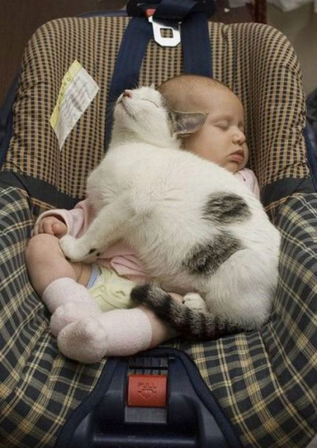 21 Cute Sleeping Cat Pictures (19)